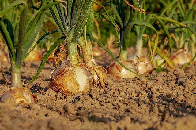 inovativni pripomočki zelenjava