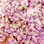 cvetje kulinarika
