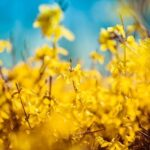 cvetje kulinarika zlatica